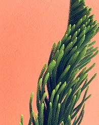 Photo plante grasse